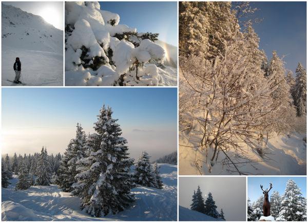 2010 : 10 janvier ski aux 7 Laux