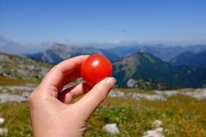 Tomates du jardin en pique-nique