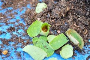 L'oeuf au fond du tube de feuilles