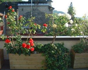 Jardinière terminée avec les fleurs